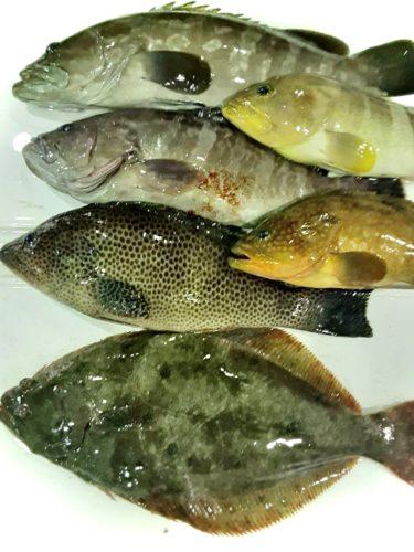 五島列島魚0201